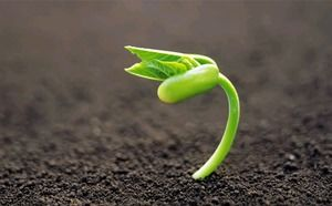 Green seed germination sprout seedling PPT background picture