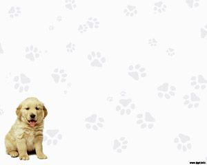 Labrador Retriever Powerpoint