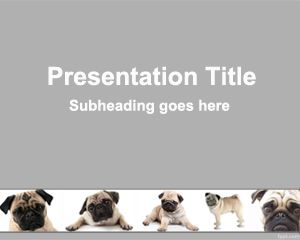 Pug PowerPoint Template
