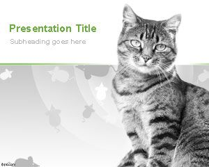 Domestic Cats PowerPoint Template