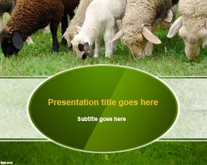 Sheep Wool PowerPoint Template