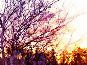 A beautiful tree art slideshow background picture