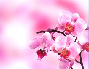 A group of pink and brilliant flowers Slide background image download