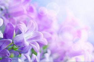 Sekelompok bunga ungu slide gambar latar belakang Download ...