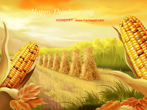Autumn maize harvest slideshow download