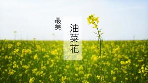 Beautiful canola flower field landscape PPT template