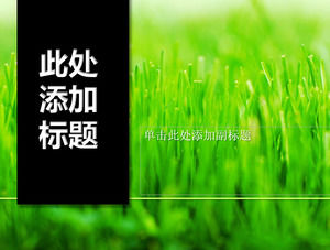 Black vertical title bud green grass ppt template powerpoint black vertical title bud green grass ppt template toneelgroepblik Image collections