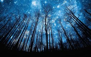 Blue sky under the deep woods back PPT background picture