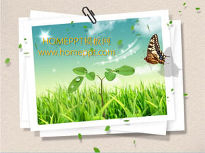 Butterfly Green Grass Slide Background Template