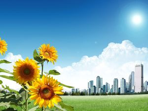 City Edge Sunflower PowerPoint background image