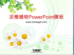 Elegant Chrysanthemum Tea Tree Background Plant PowerPoint Template Download