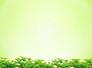 Elegant green background leaves with green leaves Slideshow background image download