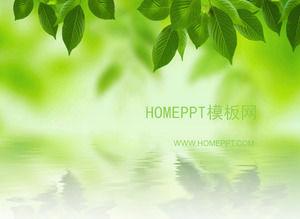 Elegant Korean leaf PPT template download