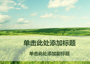 Endless green wheat field nature ppt template