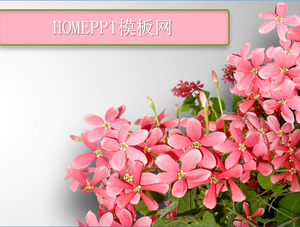 Flowers background plant theme PPT template download