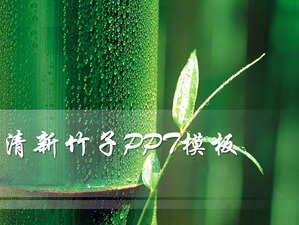 fresh bamboo background powerpoint slideshow template powerpoint
