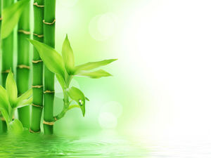 Fresh lake bamboo leaves PPT background picture