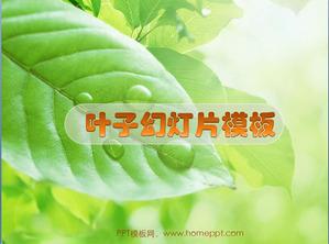 Fresh leaf slideshow download