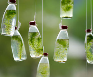 Glass Water Bottle Bottle Green Moss Plant PPT Background Image