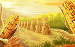 Golden corn - autumn harvest season PPT template