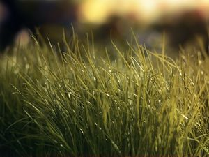 Grass PPT background image download