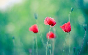 Green background red flowers beautiful PPT background picture