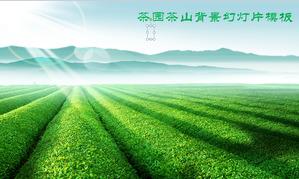 Green Chashan Chazhuang Tea Garden PPT template