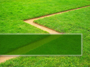Green grass plant PPT background template