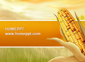 Harvest the joy of corn background PPT template