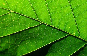 Powerpoint Modelo Natureza Da Folha Da árvore Powerpoint
