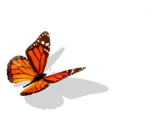 Orange Butterfly Insect Design powerpoint template