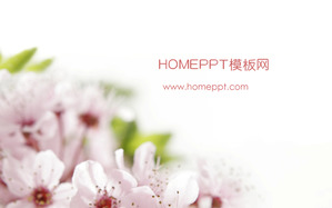 Pink Peach Blossom Background Plant Slideshow Template Download