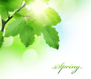 Sunshine foliage plant PPT background picture