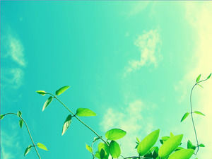 Two blue sky and white clouds under the beautiful plant PPT background picture