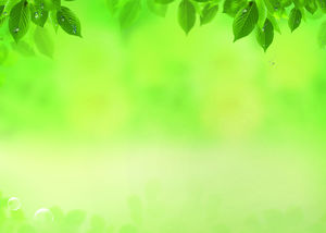 Water drops leaves yellow green tones PPT background pictures