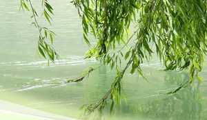 Weeping Willow Brushed Flowing Water - Wiosna Nature PPT szablon