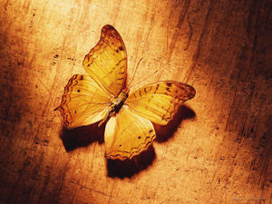 Wood on the butterfly PPT background picture